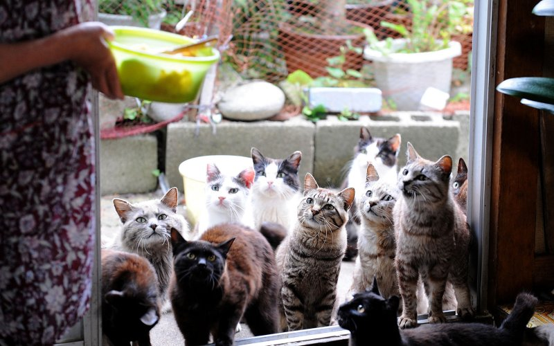 Tashirojima, A Paradise For Cats