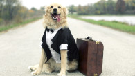 Top Tips When Traveling With Pets