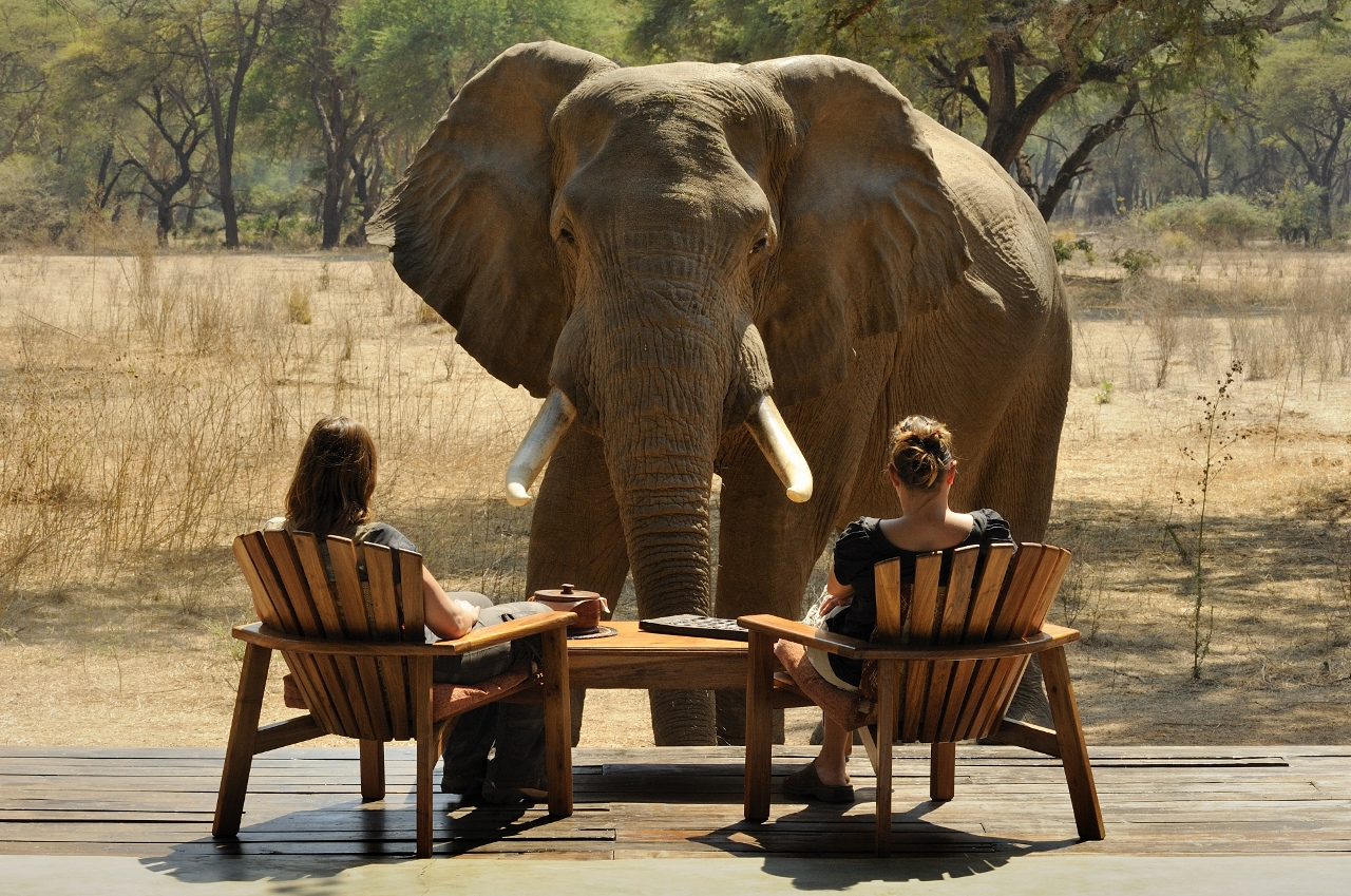 The 10 Most Exciting Safari Camps in Africa