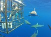 Sharks_outside_cage