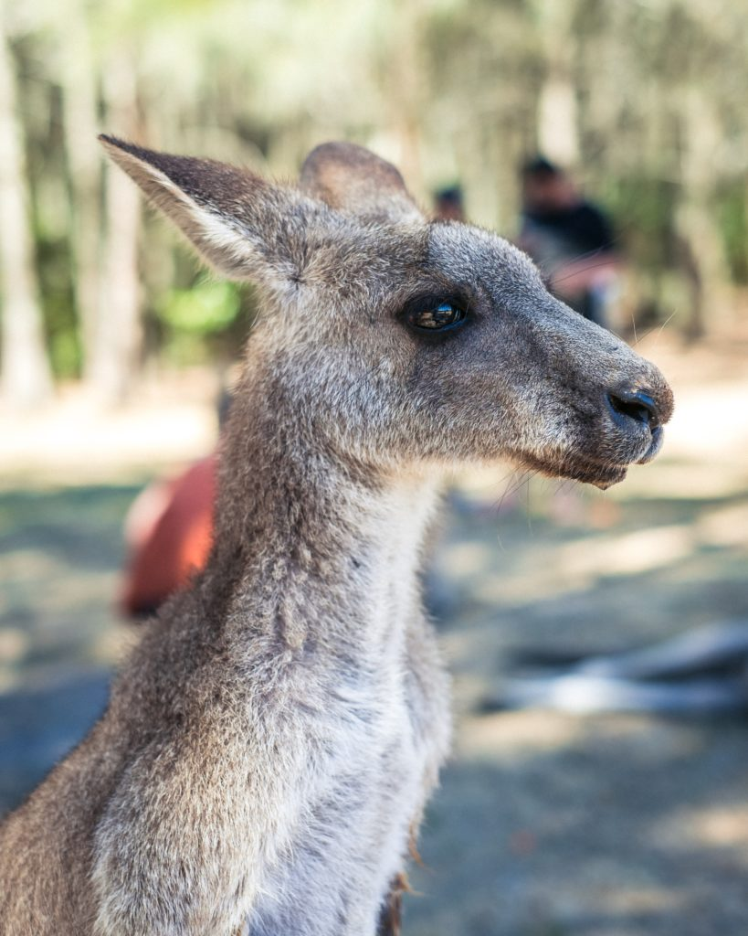 Why spend time in Australia surfing, petting kangaroos and learning English